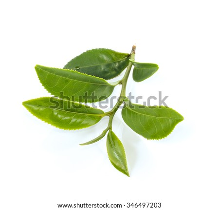 green tea on white background
