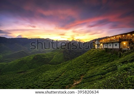 Green tea plantation during sunset at Cameron Highlands, Malaysia. Soft focus due to long exposure shot. Nature composition. - stock photo
