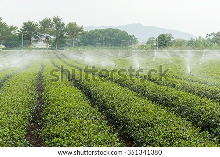 Green Tea Plantation Fields with water sprinkler system - stock photo
