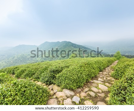 green tea plantation with stone path in cloudy - stock photo