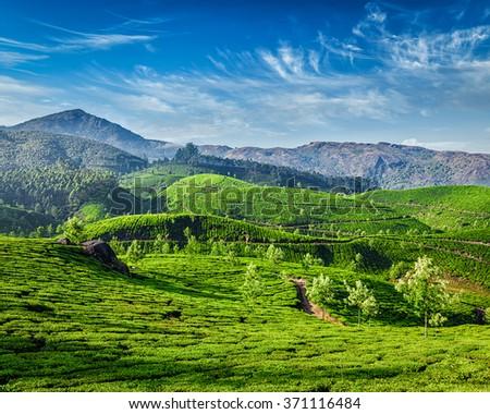 Green tea plantations in the morning, Munnar, Kerala state, India - stock photo