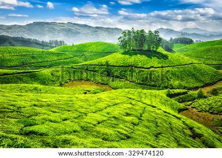 Green tea plantations. Munnar, Kerala, India - stock photo