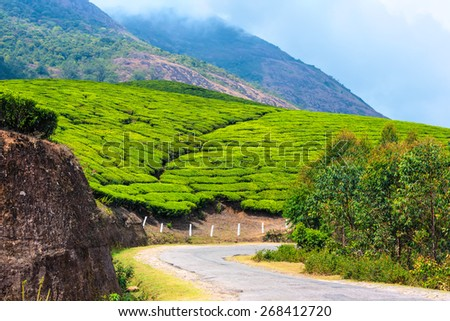 green tea plantations with road and clouds in the morning, Munnar, Kerala, beautiful India travel background - stock photo