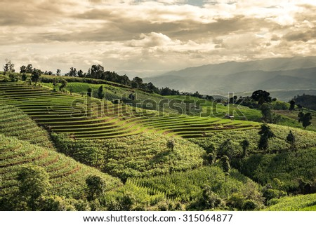 Green terraced field with light ray, mountain and cloud when sunset