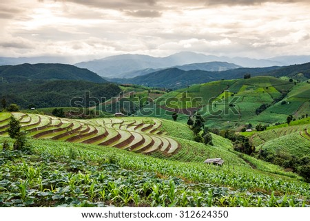 Green Terraced Fields with Cloudy  - stock photo