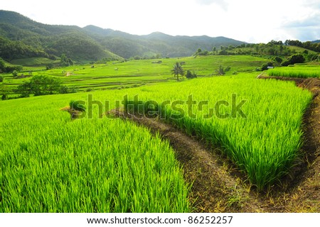 Green Terraced Rice Field - stock photo