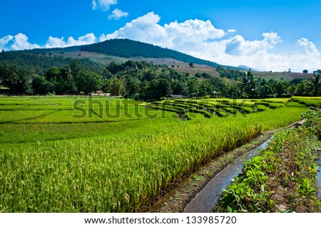 Green terraced rice field and blue sky in Thailand - stock photo
