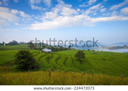 Green Terraced Rice Field in Chiangmai, Thailand