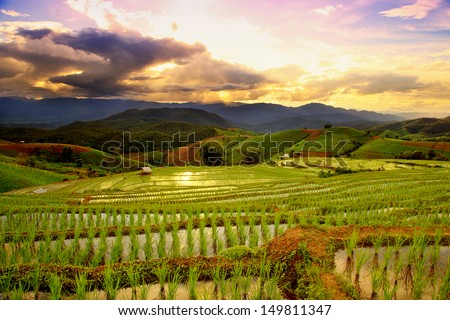 Green Terraced Rice Field in Chiangmai, Thailand at sunset