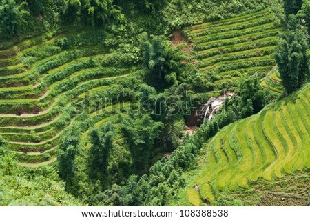 Green Terraced Rice Field in Sapa, Vietnam