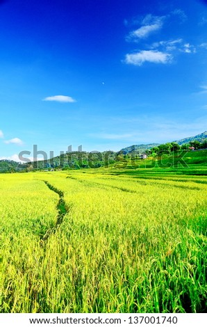 Green Terraced Rice Fields over blue sky