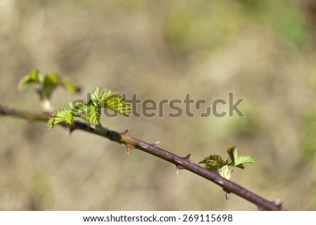 green thorny branches close up - stock photo