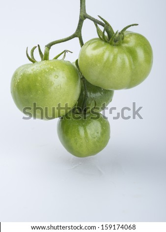 Green tomato in studio with white background
