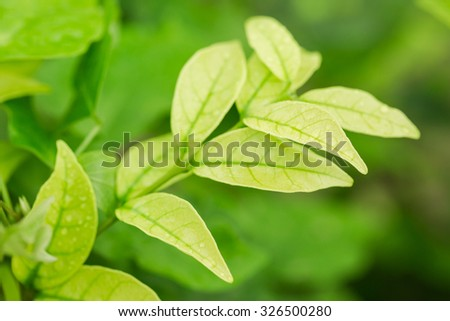 Green top leaf with raindrops - stock photo