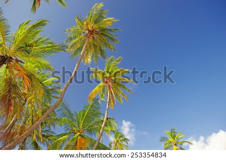 Green tops of palm trees against a clear blue sky - stock photo