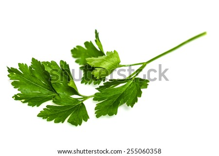 Green tops of parsley on white background - stock photo
