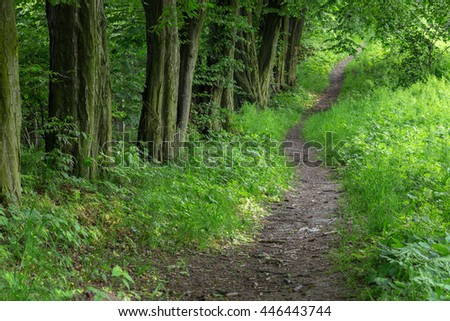 Green tree alley at spring in forest