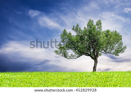 green tree and grass blue sky background