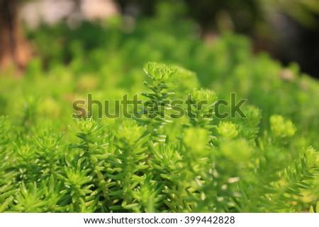 Green tree background  - stock photo