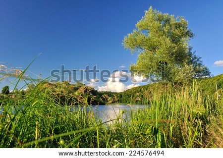 green tree by the river - stock photo