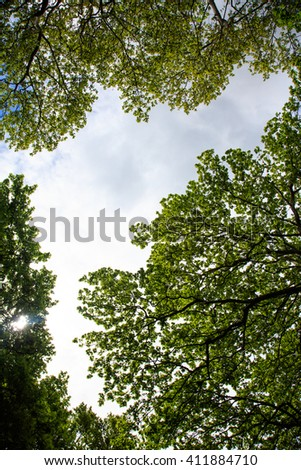 Green tree crowns on blue sky from below