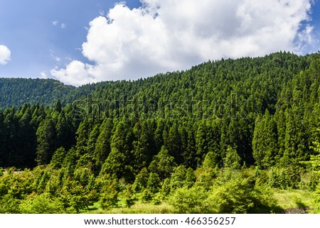 Green tree forest background, fir and pine trees in Nantou, Taiwan.