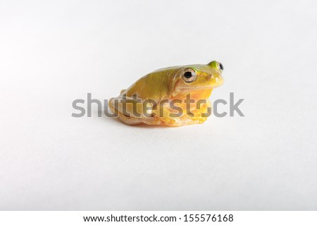 green tree frog in isolation on rim of glass - stock photo