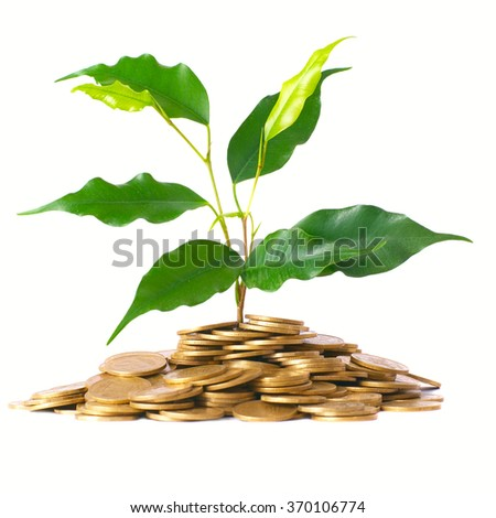 Green tree growing from the pile of golden coins. Money financial concept.