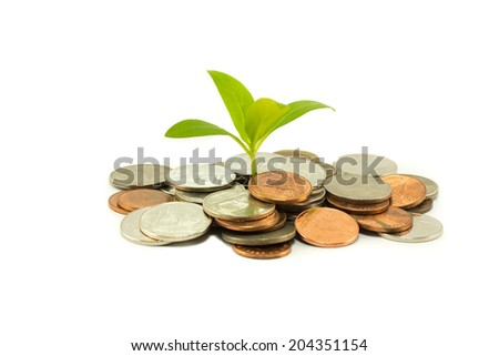 Green tree growing on money coins isolate on white background - stock photo