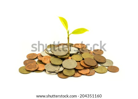 Green tree growing on money coins isolate on white background