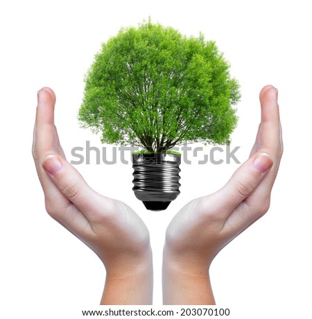 green tree growing out of a bulb in hands - stock photo