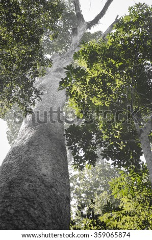Green tree in black and white Landscape. - stock photo
