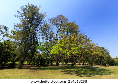 Green tree in city park. - stock photo