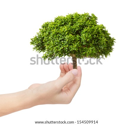 green tree in hand as environmental concept - stock photo