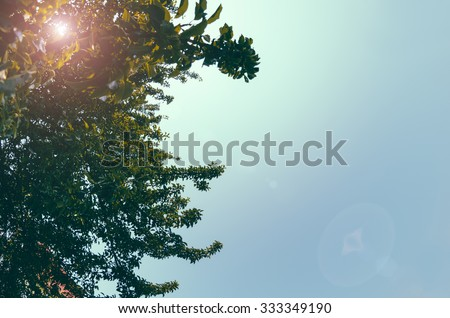 Green tree in summer time on the blue sky background with vintage filter - stock photo