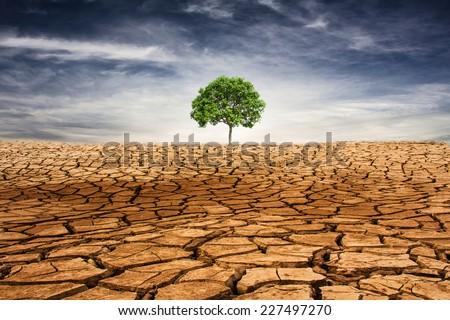 Green tree in the desert - stock photo