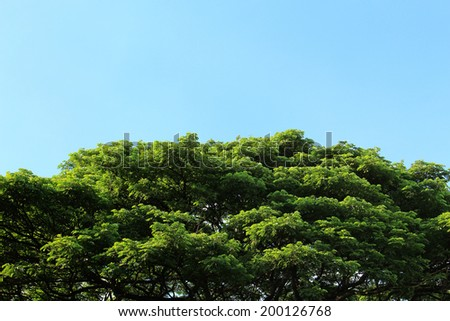 Green tree in tropical garden