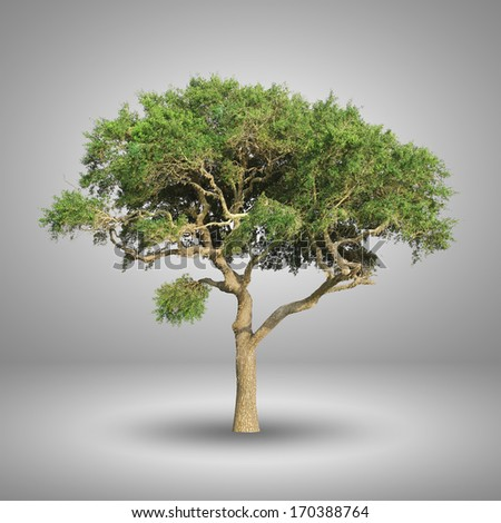 Green tree isolated on grey background