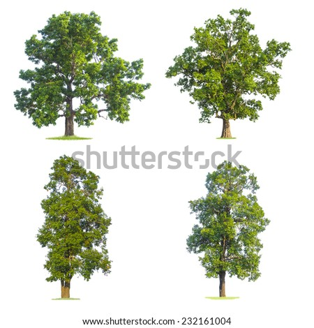 green tree isolated on pure white background - stock photo