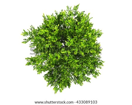 green tree isolated white background