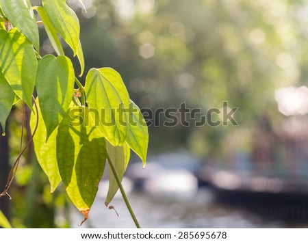 green tree leaf in natural on sunlight background - stock photo