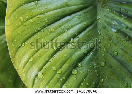 green tree leave whit rain drops - stock photo