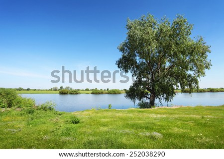 green tree near the river, summer landscape in sunny day - stock photo