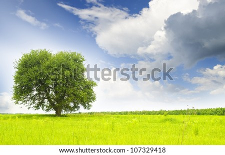green tree on a turning summer meadow