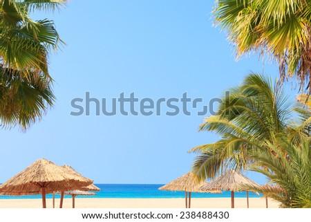 Green tree on a white sand beach in Boavista - Cape Verde - stock photo