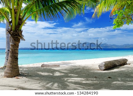 Green tree on a white sand beach. Malcapuya island, Coron, Philippines. - stock photo