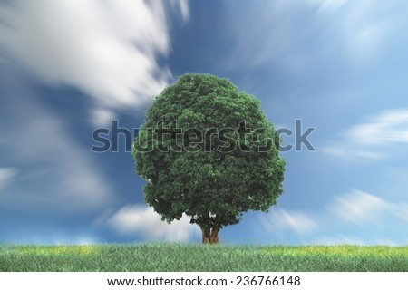 green tree on grassy hill and blue sky with clouds in the background  - stock photo