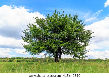Green tree on meadow with grass - stock photo