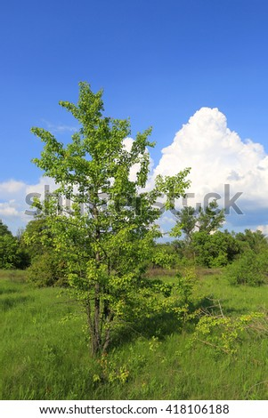 Green tree on spring meadow at nice sunny day - stock photo