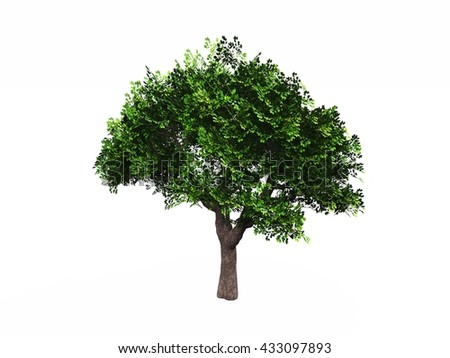 green tree on white background isolated